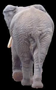 Elephantback